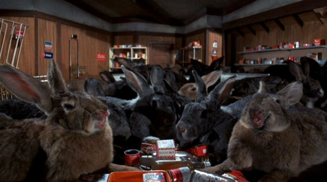 night-of-the-lepus